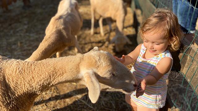 Dóna de menjar als nostres animals