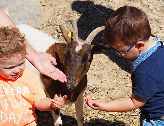 https://granjaaventurapark.com/wp-content/uploads/GRA_Fotos_arrusel_Granja_Aventura_Park_animales_dar_de_comer_535x411_04.jpg