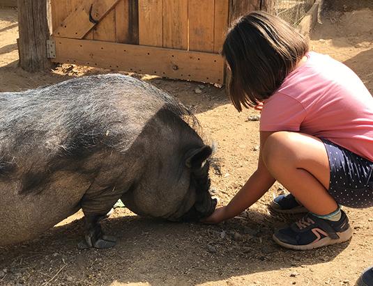 https://granjaaventurapark.com/wp-content/uploads/GRA_Fotos_arrusel_Granja_Aventura_Park_animales_dar_de_comer_535x411_08.jpg