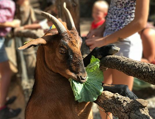 https://granjaaventurapark.com/wp-content/uploads/GRA_Fotos_arrusel_Granja_Aventura_Park_animales_dar_de_comer_535x411_09.jpg