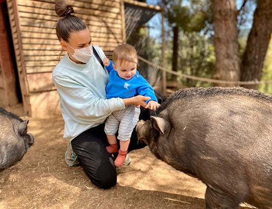 https://granjaaventurapark.com/wp-content/uploads/GRA_Fotos_arrusel_Granja_Aventura_Park_animales_toca_toca_535x411_02.jpg