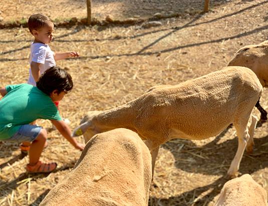 https://granjaaventurapark.com/wp-content/uploads/GRA_Fotos_arrusel_Granja_Aventura_Park_animales_toca_toca_535x411_04.jpg