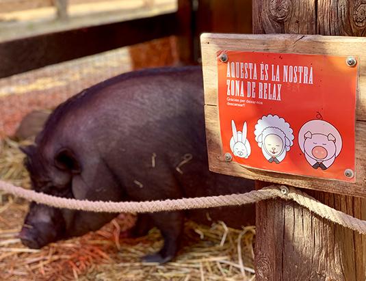 https://granjaaventurapark.com/wp-content/uploads/GRA_Fotos_arrusel_Granja_Aventura_Park_animales_toca_toca_535x411_05.jpg
