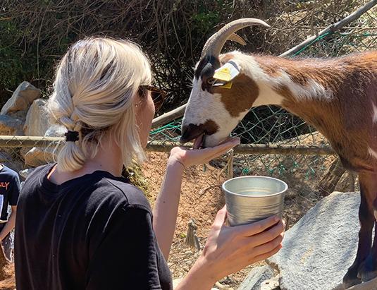 https://granjaaventurapark.com/wp-content/uploads/GRA_Fotos_arrusel_Granja_Aventura_Park_animales_toca_toca_535x411_06.jpg