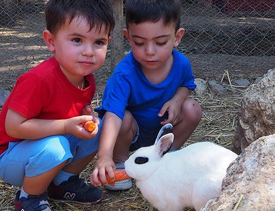 https://granjaaventurapark.com/wp-content/uploads/GRA_Fotos_arrusel_Granja_Aventura_Park_animales_toca_toca_535x411_07.jpg